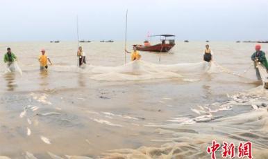 """江西鄱陽湖結束春季禁漁期""""開湖"""""""