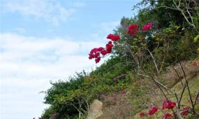 《地理中國》百年地理大發現 遠古奇花